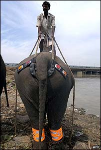 Elephant wearing reflectors