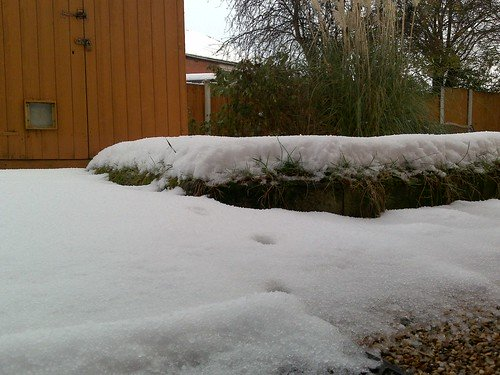 Snow in my dad's garden, part two