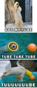 Polar bear: got my tube, tube tube tube, tuuuuuuube!