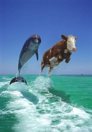 Cow and dolphin