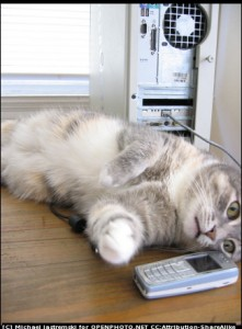 A cat on a mobile phone.