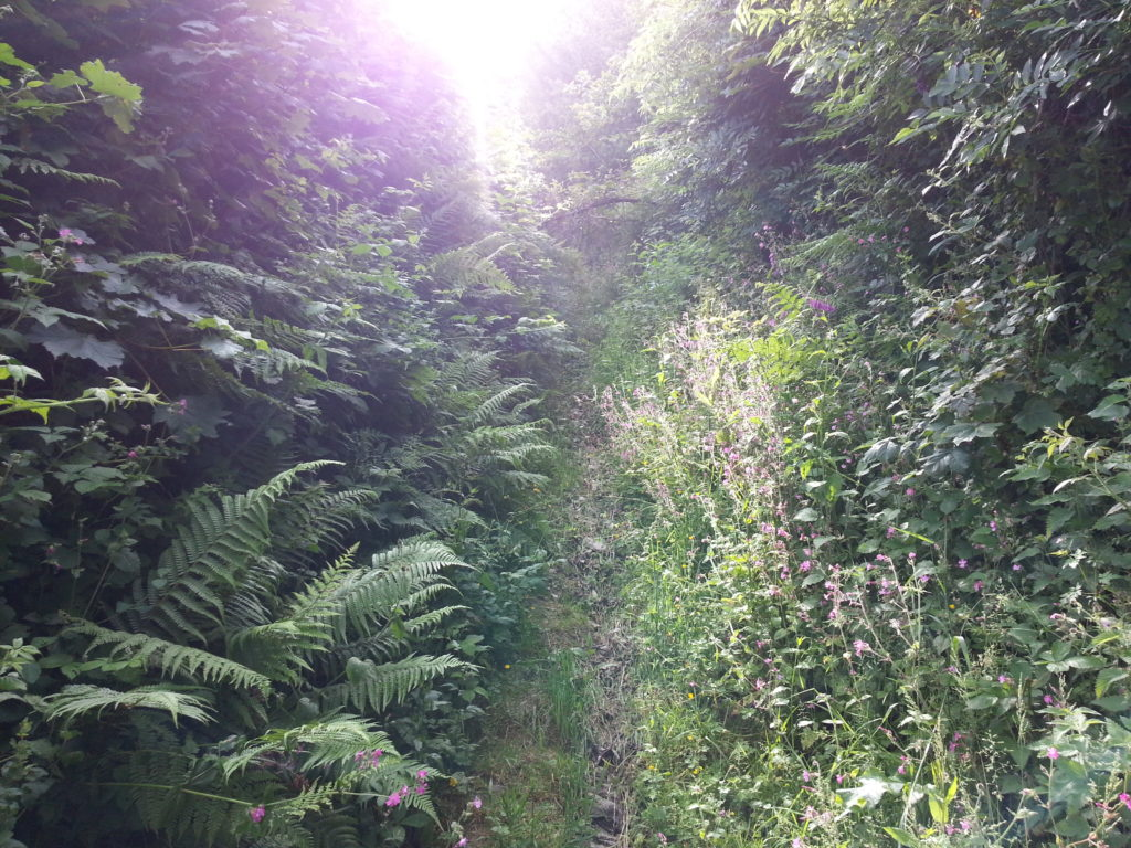 Very badly-maintained footpath in North Devon.