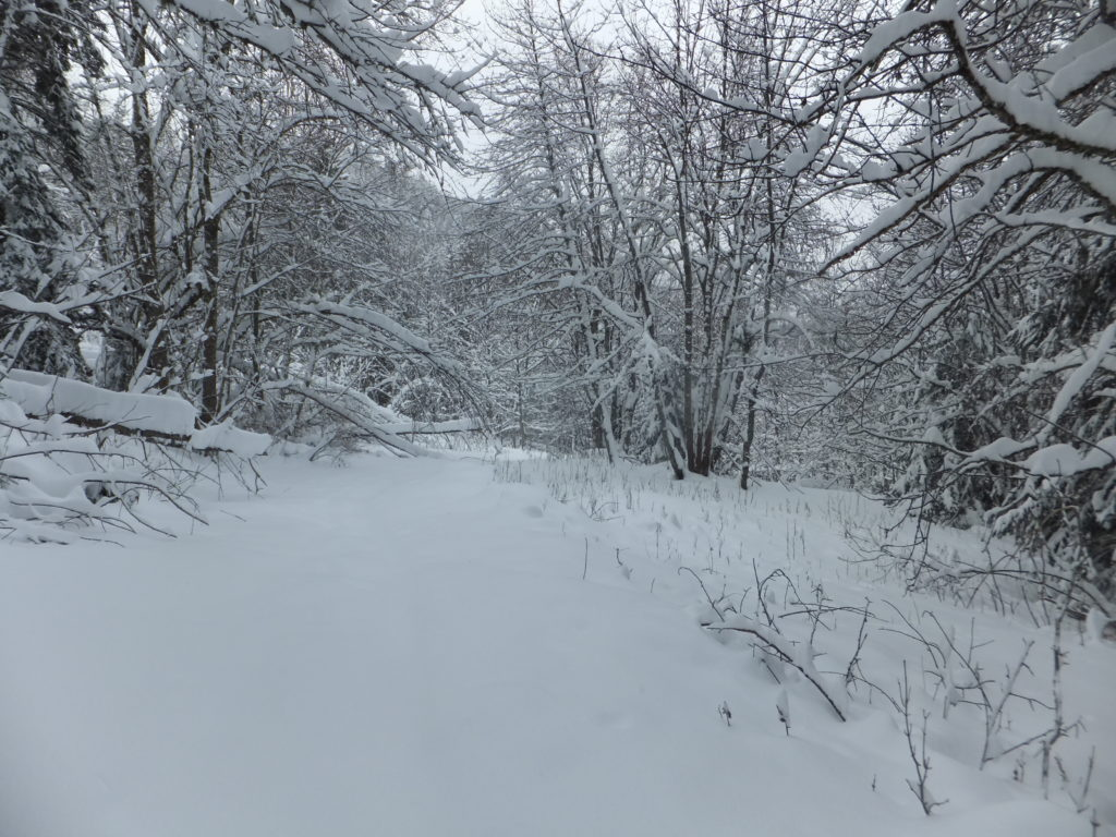 "The snow-covered ""path"" from La Tania to La Nouvaz."