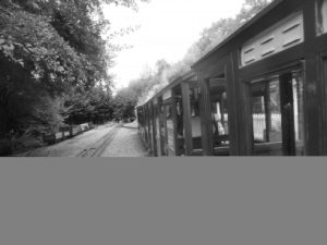Steam train in the Forest of Dean.