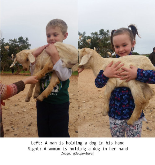 An AI mistakes a sheep for a dog when it is held by a child.