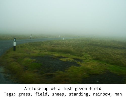 A foggy field, incorrectly identified by an AI as containing sheep.