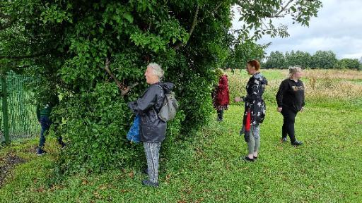 Members of Dan's family hunt through the ivy of a tree.