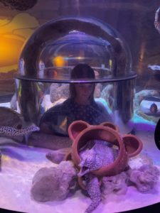 Child peering into a fishtank using a dome underneath it.