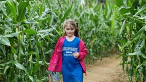 A girl looks lost in a maize maze.