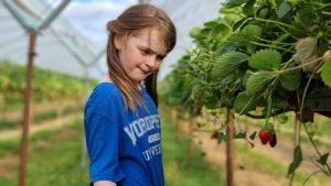 A girl looks at a strawberry.